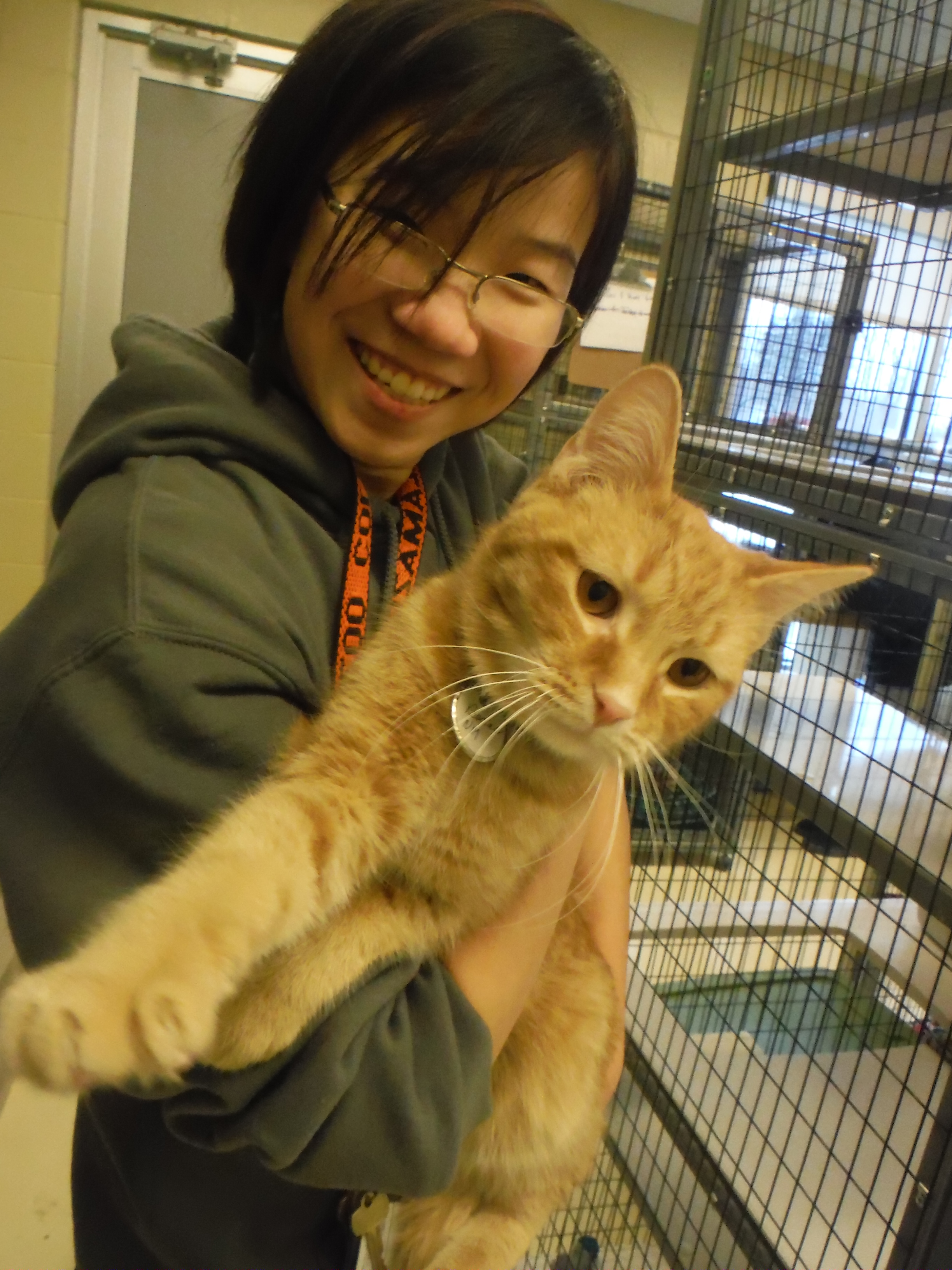 A student holding a cat at an animal shelter