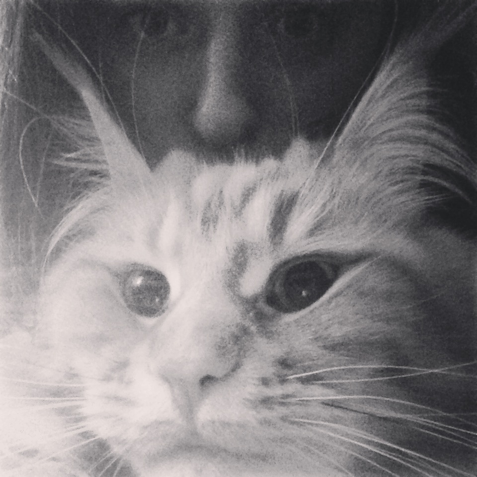 Student selfie with a cat