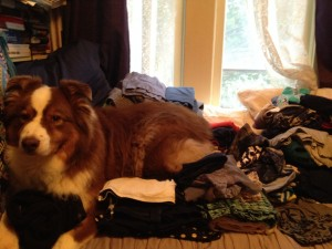 A small dog laying on a pile of nicely folded clothes