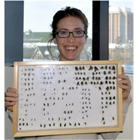K alumna Rachel Mallinger holds a visual presentation for Wisconsin's Wild Bees