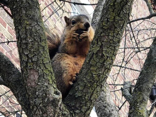 Squirrels at Kalamazoo College