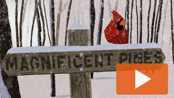 Cardinal on Magnificient Pines Post Happy Holidays 2019