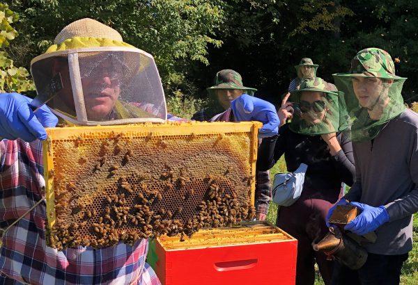 Students observe honey bees