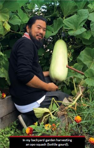 Shane Bernardo squatting in their garden harvesting an opo squash