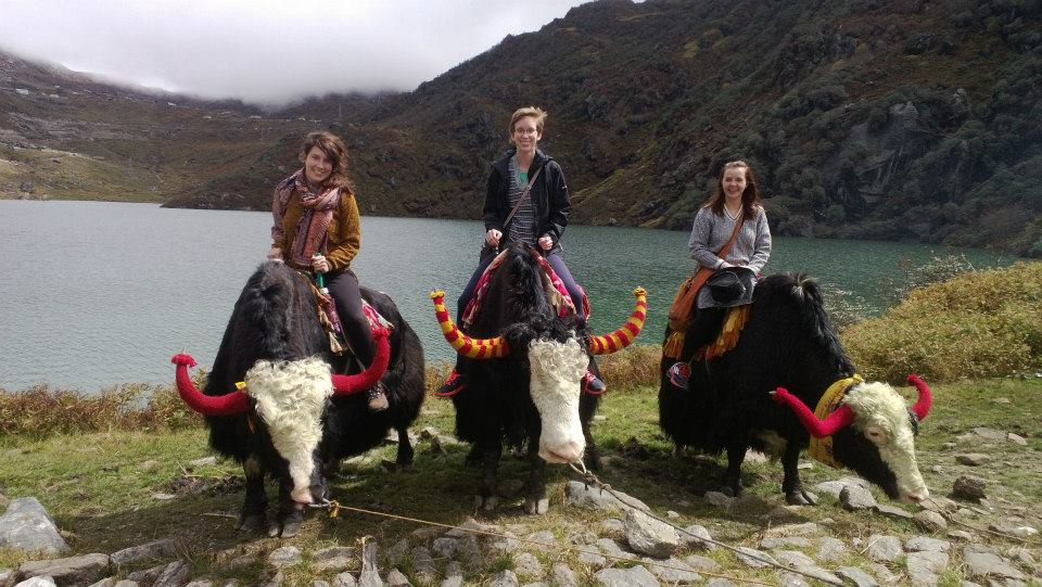 Three female students riding yaks