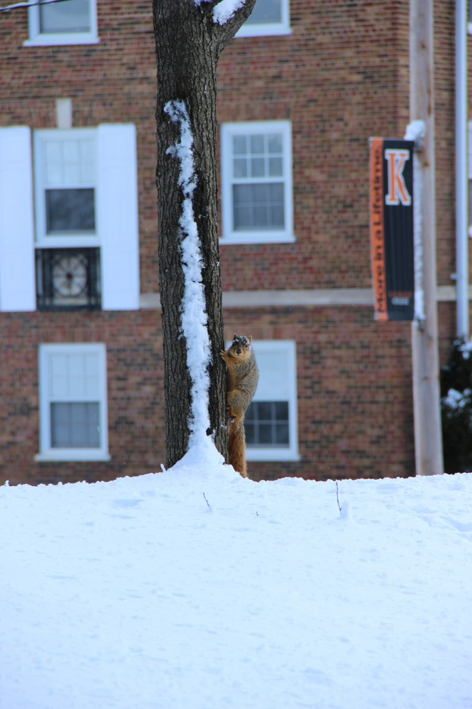 Squirrel climbing up a tree with snow on the ground