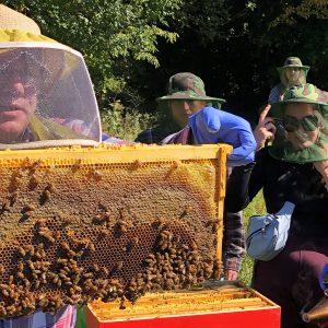 Students Observe Honey Bees_fb