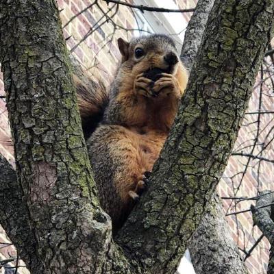 Squirrel-Watching Club